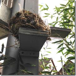 2 Nest auf Treppe